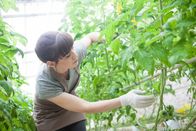 女性の農業